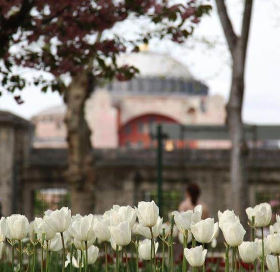 ruže ispred zgrade